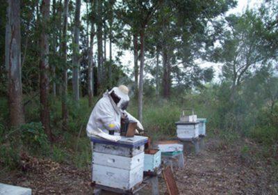 img apicultura corrientes